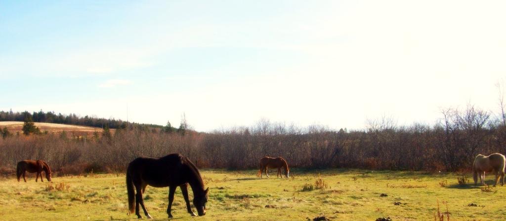 The.Herd