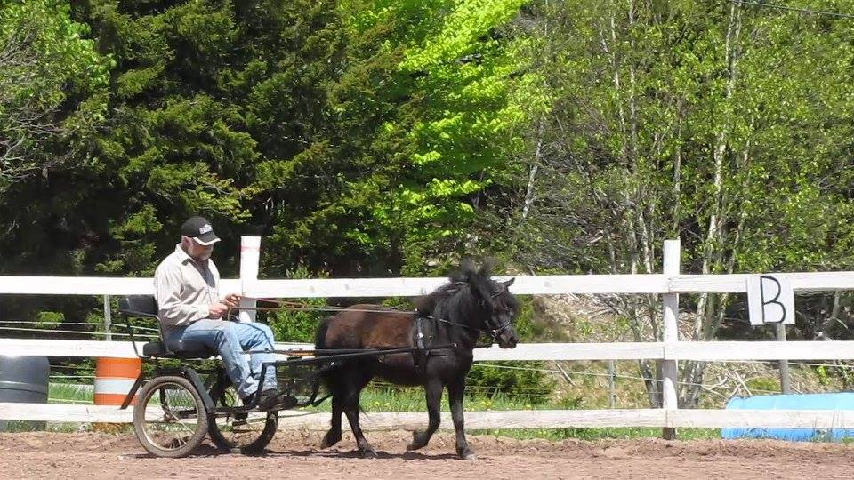 Miniature Horse Driving Clinic at Spirit Reins Ranch